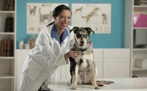 Nasce a Napoli il primo Master in Pet therapy