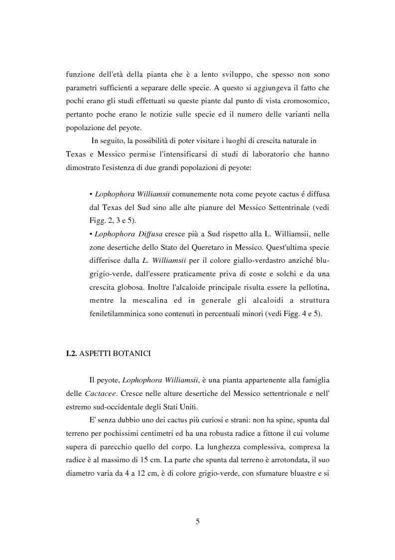 Anteprima della tesi: Peyote: profilo farmaco-tossicologico e modelli culturali nelle popolazioni indigene nordamericane, Pagina 5