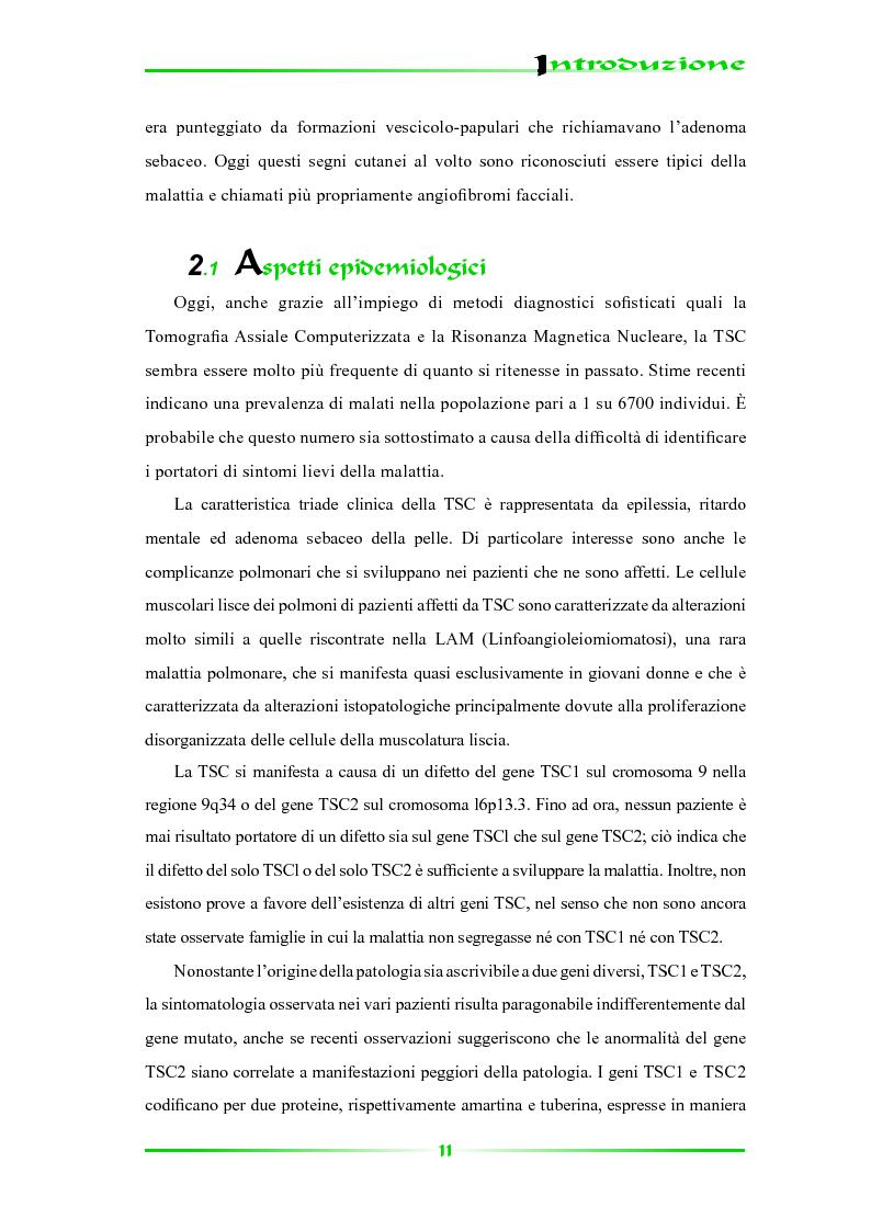 Anteprima della tesi: Espressione selettiva della survivina e sua regolazione nella Sclerosi Tuberosa, una patologia multisistemica, Pagina 6