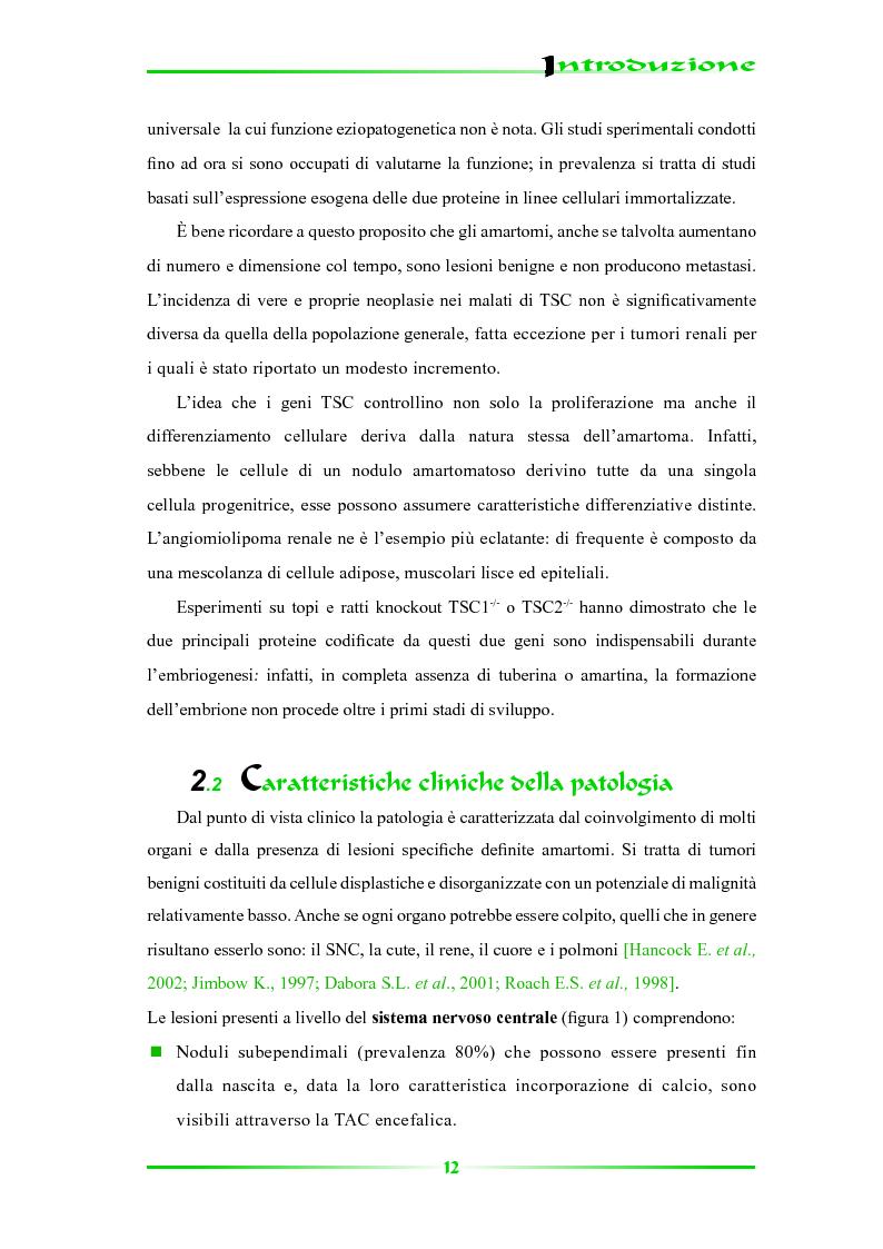 Anteprima della tesi: Espressione selettiva della survivina e sua regolazione nella Sclerosi Tuberosa, una patologia multisistemica, Pagina 7