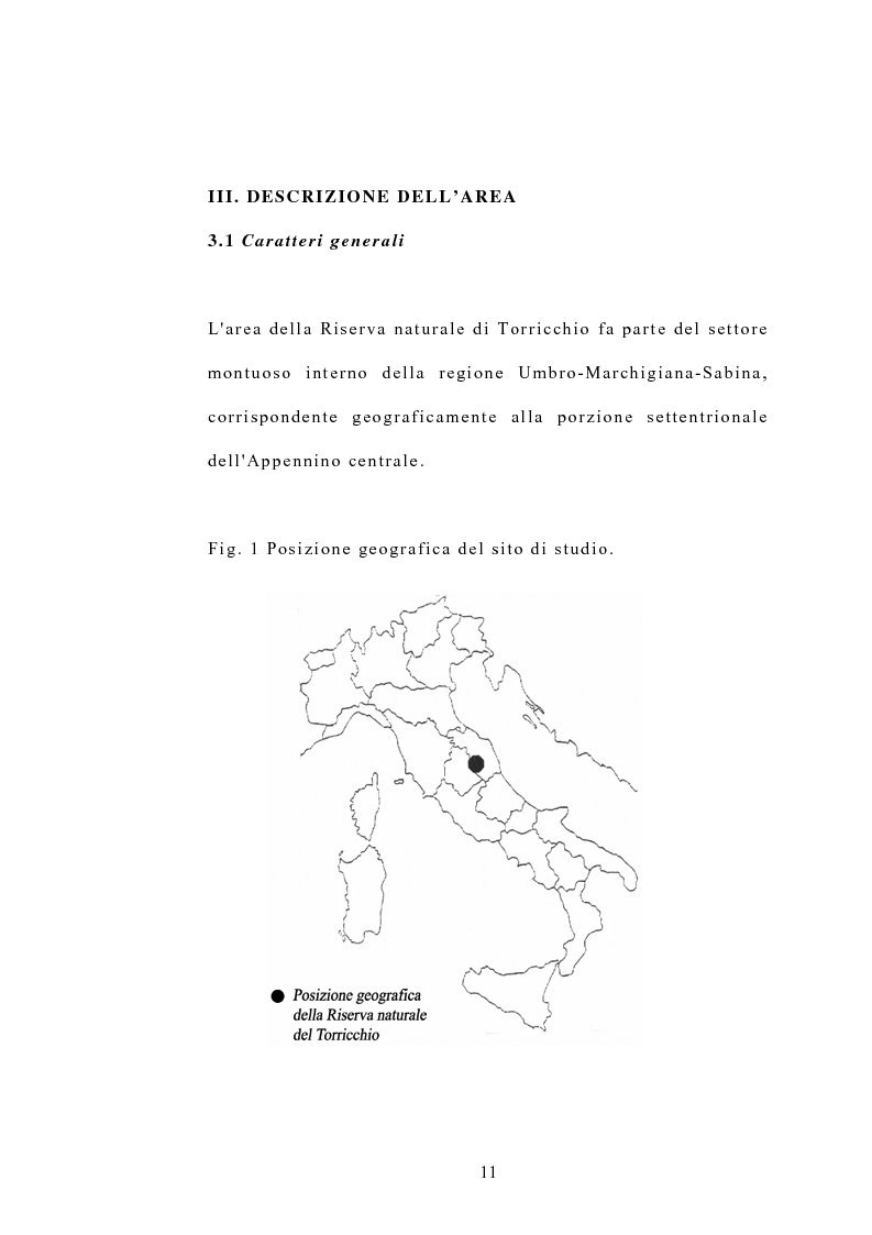 Anteprima della tesi: Processi di popolazione in una fase di colonizzazione a ginepro nei pascoli xerici e abbandonati nella Riserva naturale di Torricchio, Pagina 11