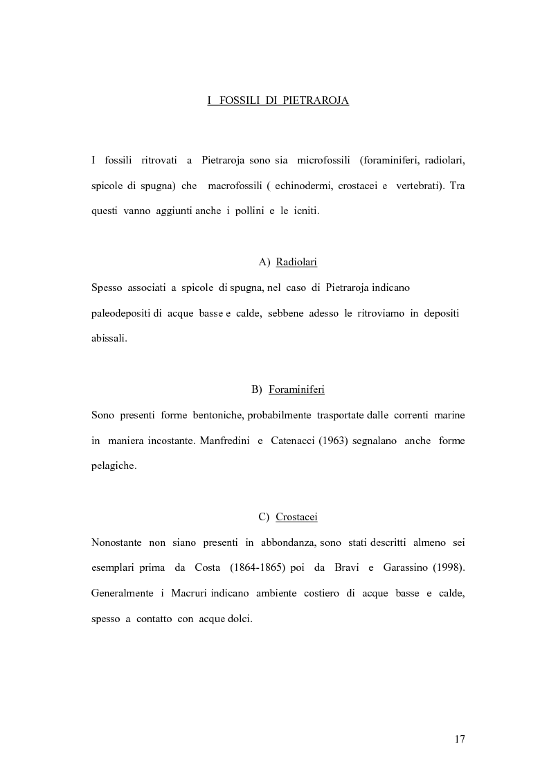Anteprima della tesi: I coproliti del giacimento di Pietraroia (BN): analisi morfologica ed ipotesi paleoecologiche., Pagina 14