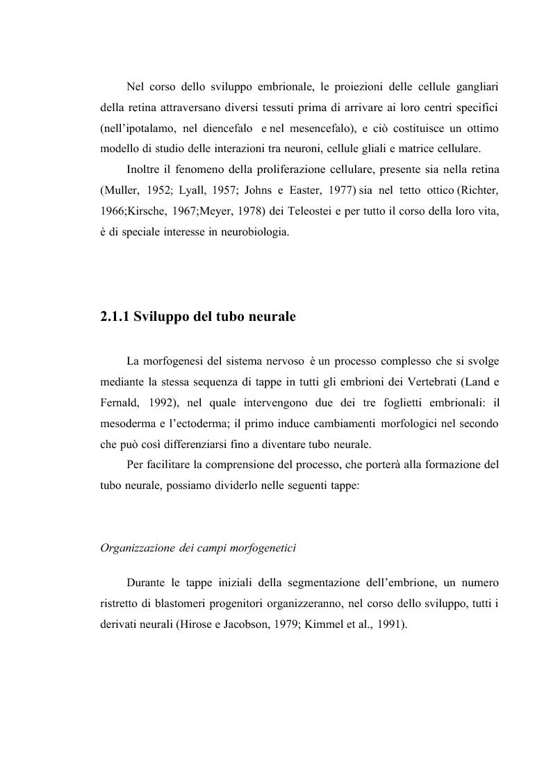 Anteprima della tesi: Il sistema visivo del Danio rerio come modello di studio per malattie congenite umane: induzione di ciclopia e studio immunoistochimico., Pagina 8