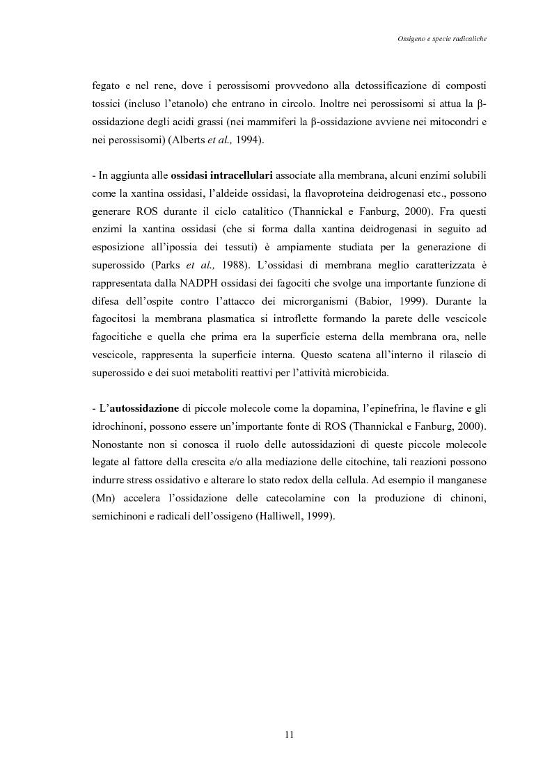 Anteprima della tesi: Modulazione degli enzimi antiossidanti in Tapes philippinarum e Scapharca inaequivalvis in condizioni di anossia e successiva riossigenazione, Pagina 13