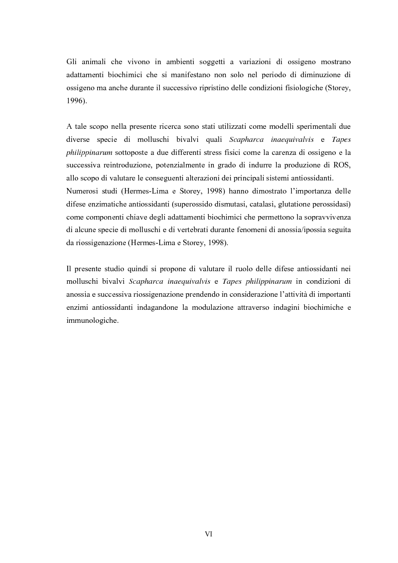 Anteprima della tesi: Modulazione degli enzimi antiossidanti in Tapes philippinarum e Scapharca inaequivalvis in condizioni di anossia e successiva riossigenazione, Pagina 2