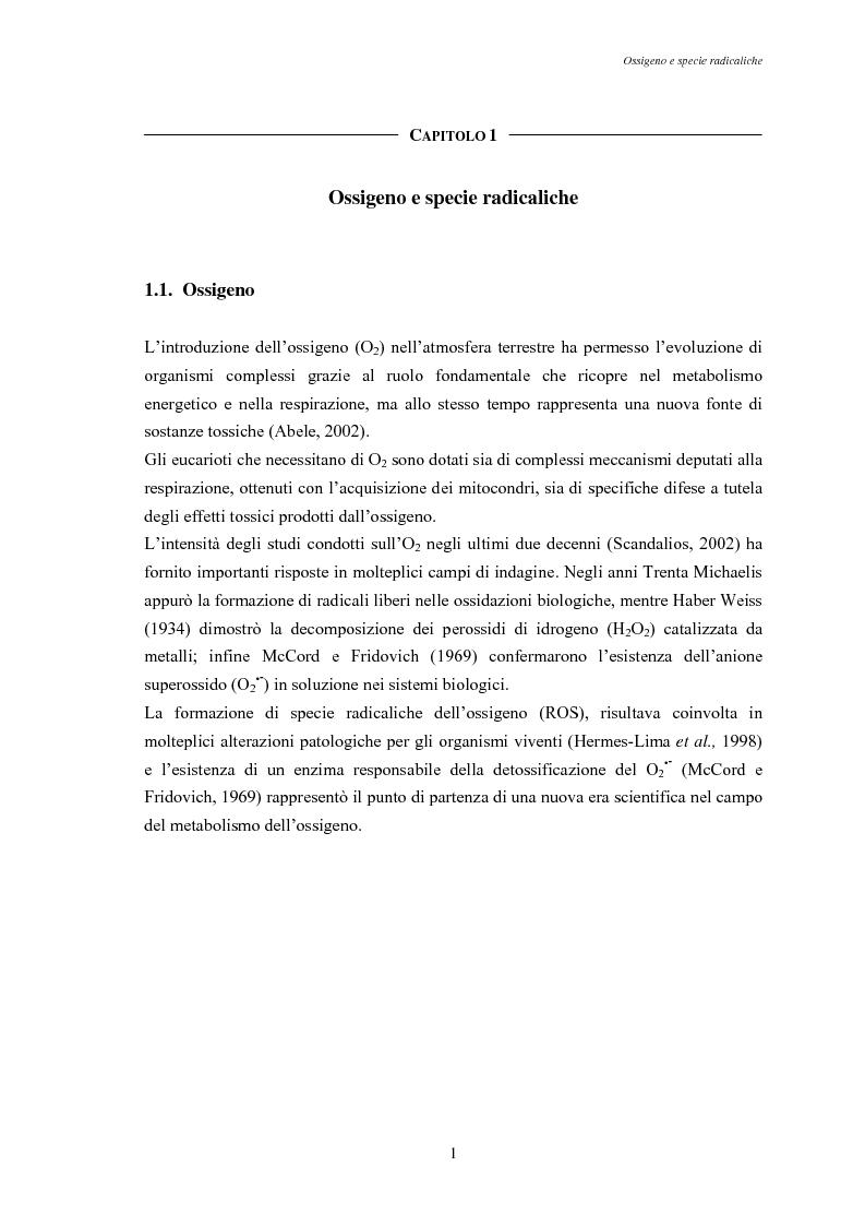 Anteprima della tesi: Modulazione degli enzimi antiossidanti in Tapes philippinarum e Scapharca inaequivalvis in condizioni di anossia e successiva riossigenazione, Pagina 3