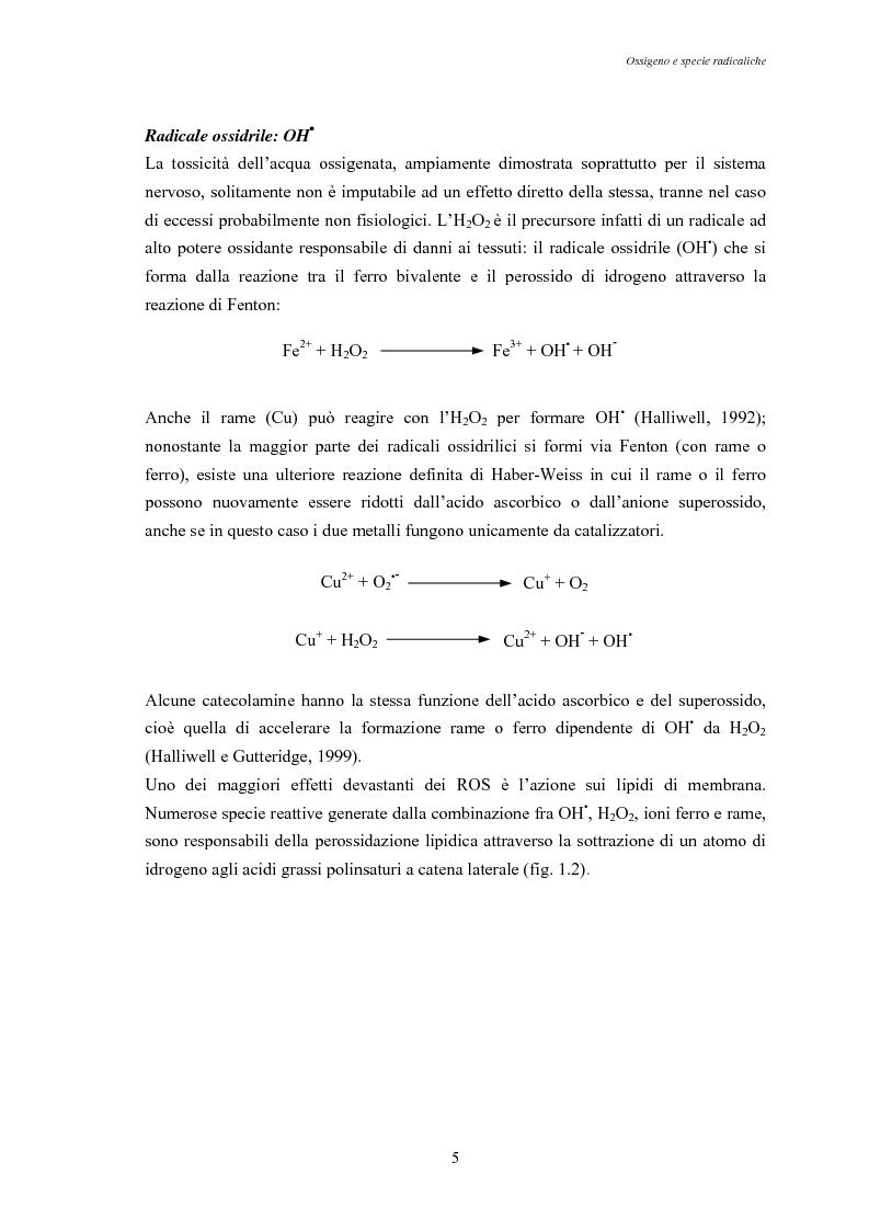 Anteprima della tesi: Modulazione degli enzimi antiossidanti in Tapes philippinarum e Scapharca inaequivalvis in condizioni di anossia e successiva riossigenazione, Pagina 7