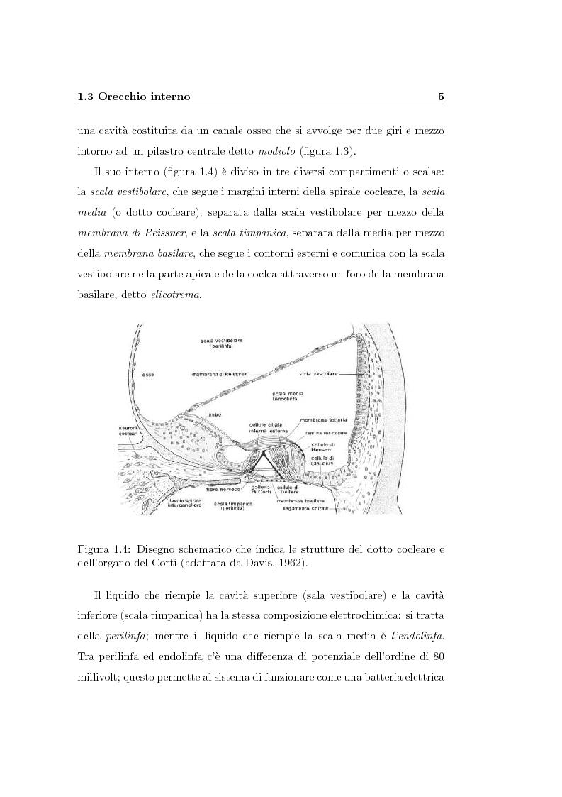 Anteprima della tesi: Modelli lineari e non lineari di partizione cocleare: loro realizzazione con filtri ad onda, Pagina 7