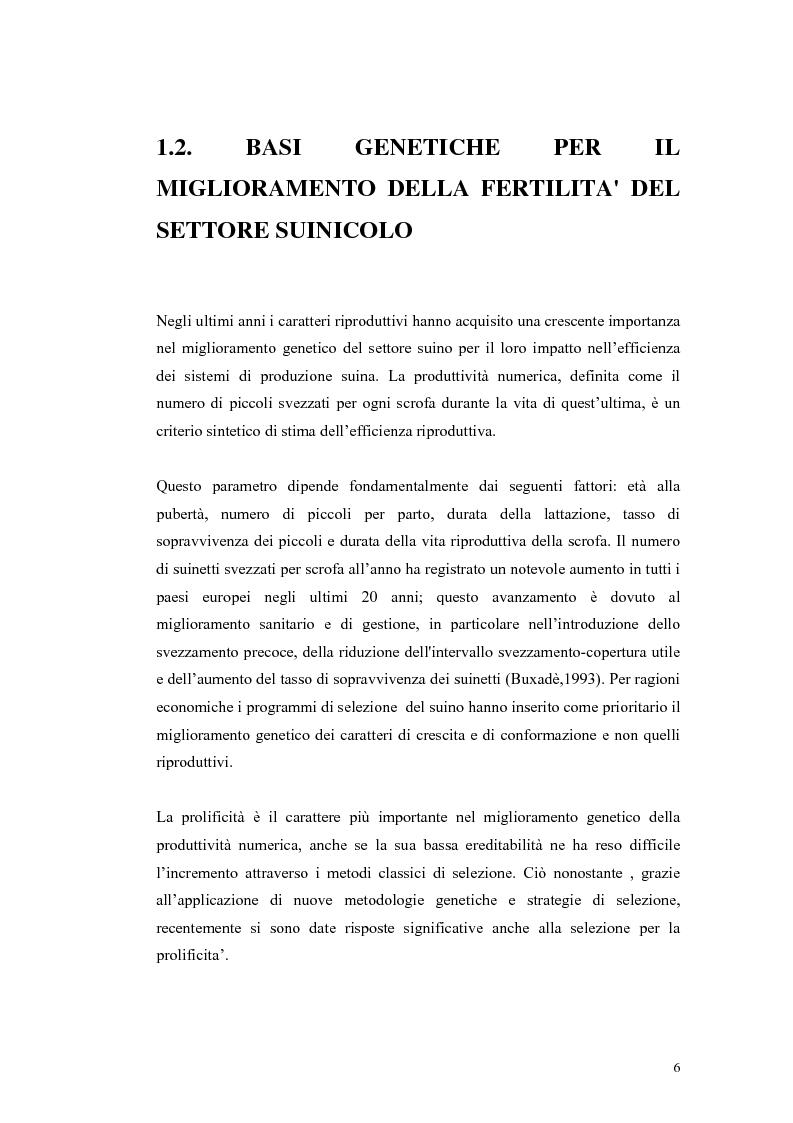 Anteprima della tesi: Polimorfismi SNP nel gene candidato BMPR1B per la prolificità nel suino in incroci Iberico X Meishan, Pagina 3