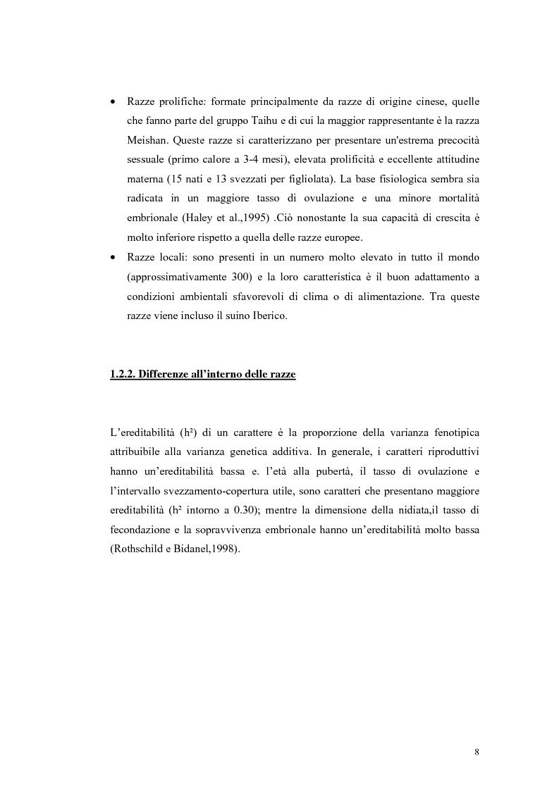 Anteprima della tesi: Polimorfismi SNP nel gene candidato BMPR1B per la prolificità nel suino in incroci Iberico X Meishan, Pagina 5