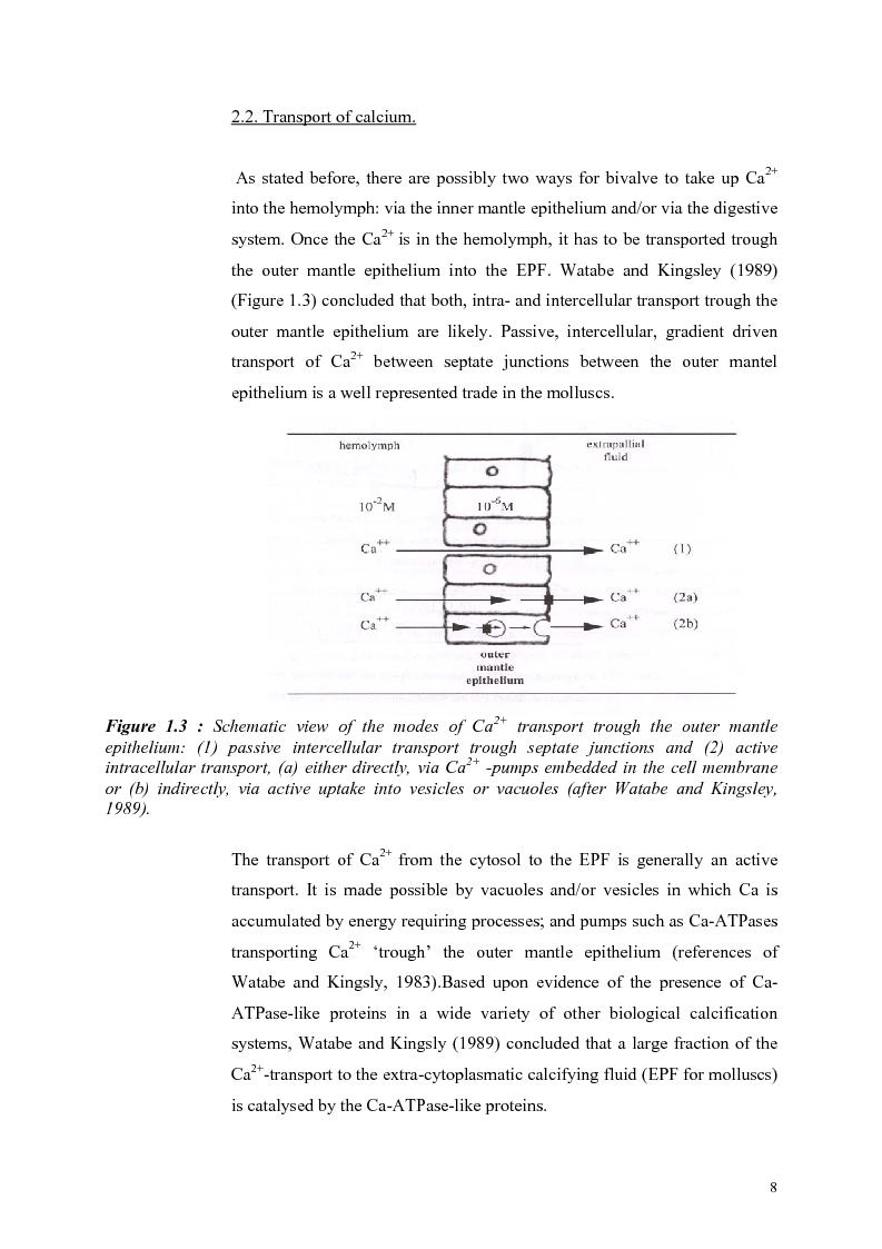 Anteprima della tesi: Do Marene Bivalves record Paleo-productivity?, Pagina 5
