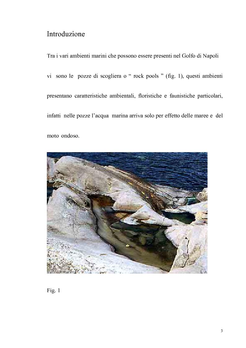 Anteprima della tesi: Primo contributo sullo studio delle comunità animali presenti nelle pozze di scogliera del golfo di Napoli, Pagina 1