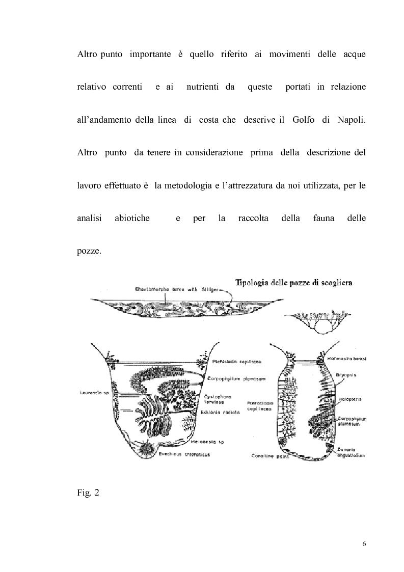 Anteprima della tesi: Primo contributo sullo studio delle comunità animali presenti nelle pozze di scogliera del golfo di Napoli, Pagina 4