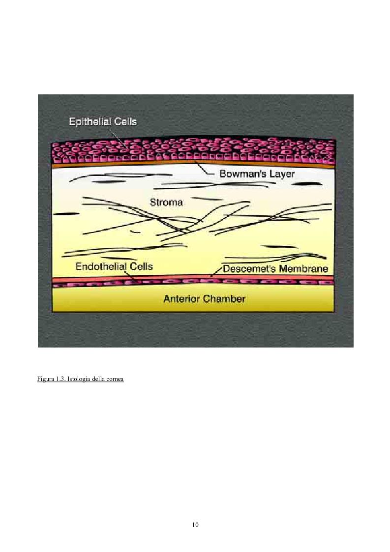 Anteprima della tesi: Studio del profilo di espressione genica in cornee sane ed in cornee affette da cheratocono., Pagina 7