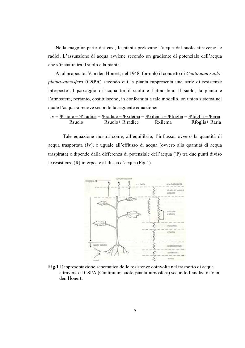 Anteprima della tesi: Variazioni delle relazioni idriche in Helianthus annuus L. durante le fasi vegetative, Pagina 2