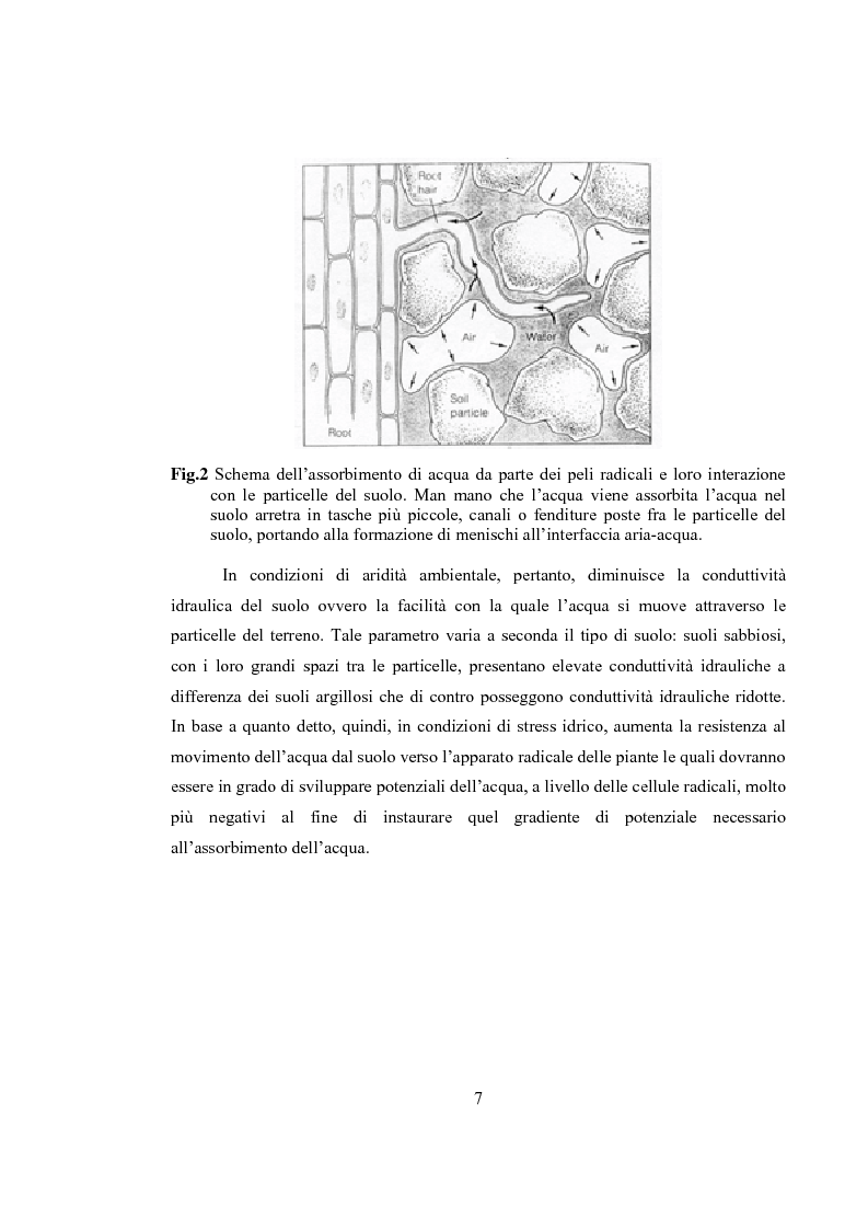 Anteprima della tesi: Variazioni delle relazioni idriche in Helianthus annuus L. durante le fasi vegetative, Pagina 4