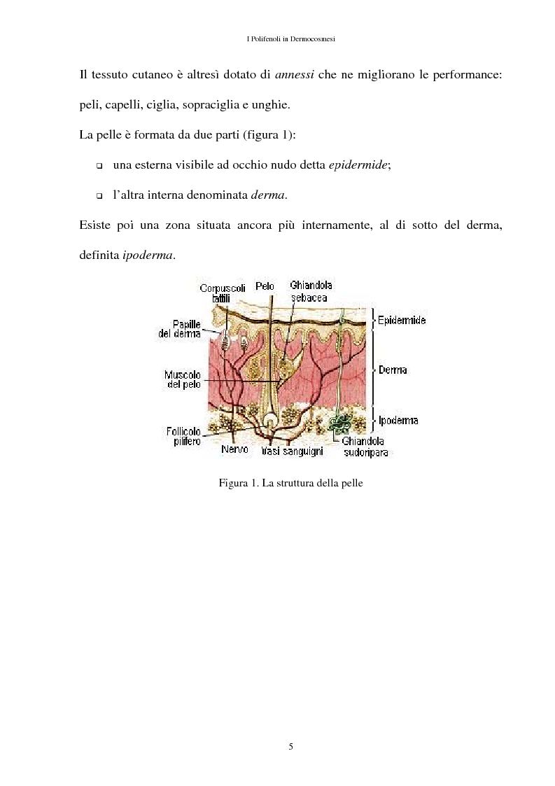 Anteprima della tesi: I Polifenoli in Dermocosmesi, Pagina 2