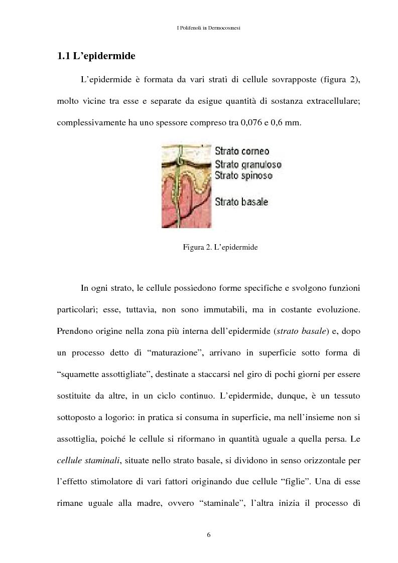 Anteprima della tesi: I Polifenoli in Dermocosmesi, Pagina 3