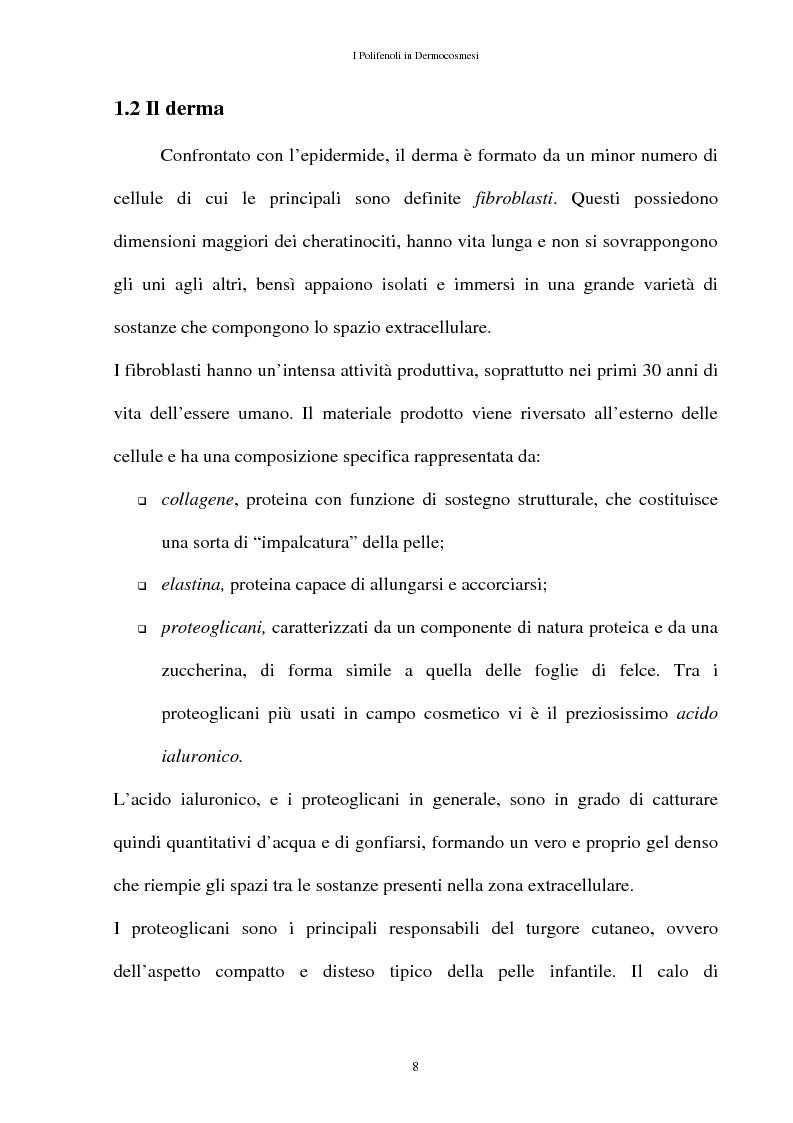 Anteprima della tesi: I Polifenoli in Dermocosmesi, Pagina 5