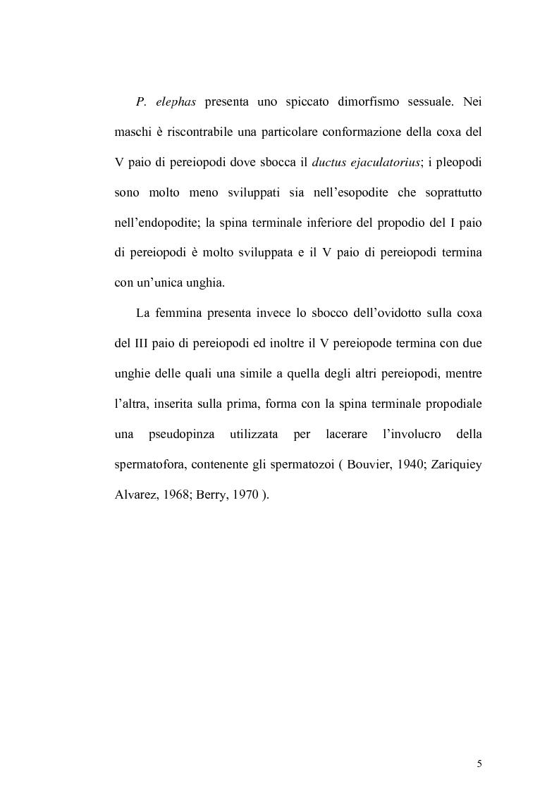 Anteprima della tesi: Biologia e catture dell'aragosta mediterranea Palinurus elephas, Pagina 4
