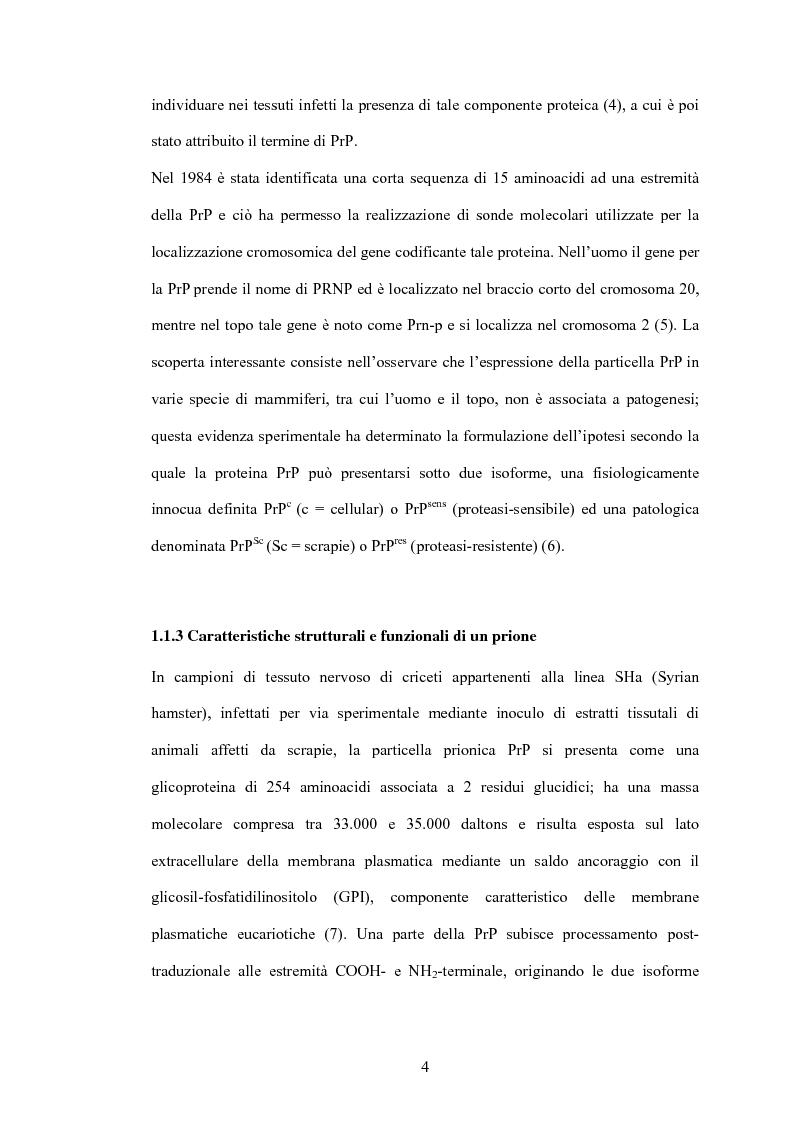 Anteprima della tesi: Clonaggio del cDNA per il fattore di differenziamento eritrocitario EDRF e studio della sua espressione nell'uomo, Pagina 4