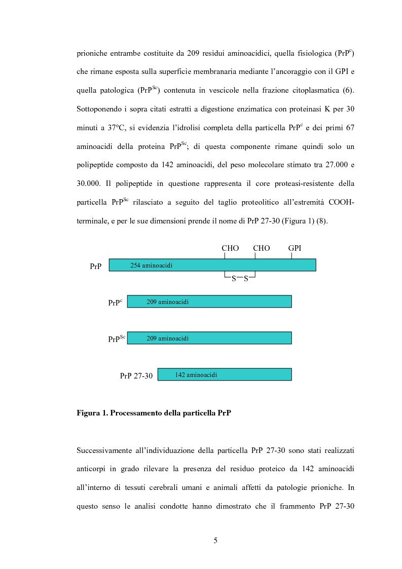 Anteprima della tesi: Clonaggio del cDNA per il fattore di differenziamento eritrocitario EDRF e studio della sua espressione nell'uomo, Pagina 5