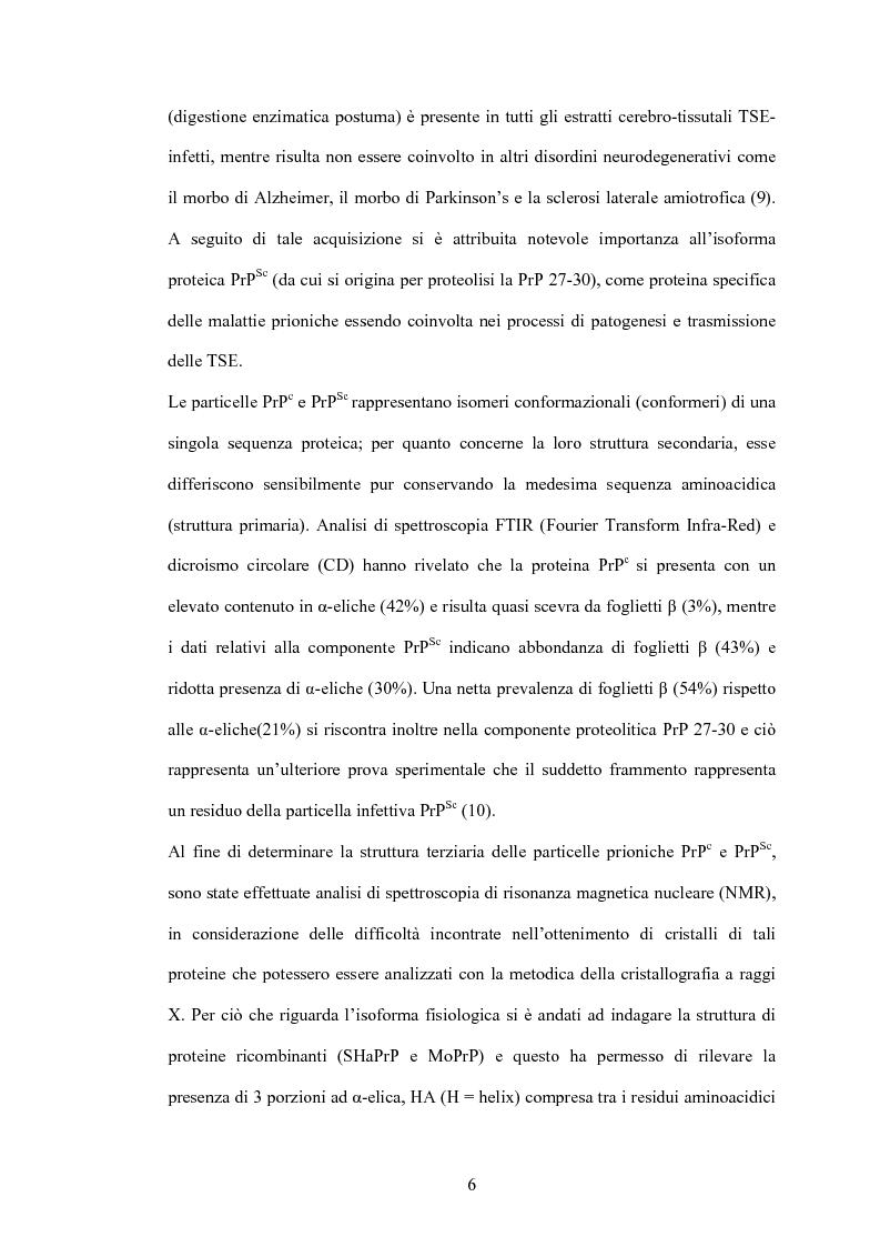 Anteprima della tesi: Clonaggio del cDNA per il fattore di differenziamento eritrocitario EDRF e studio della sua espressione nell'uomo, Pagina 6