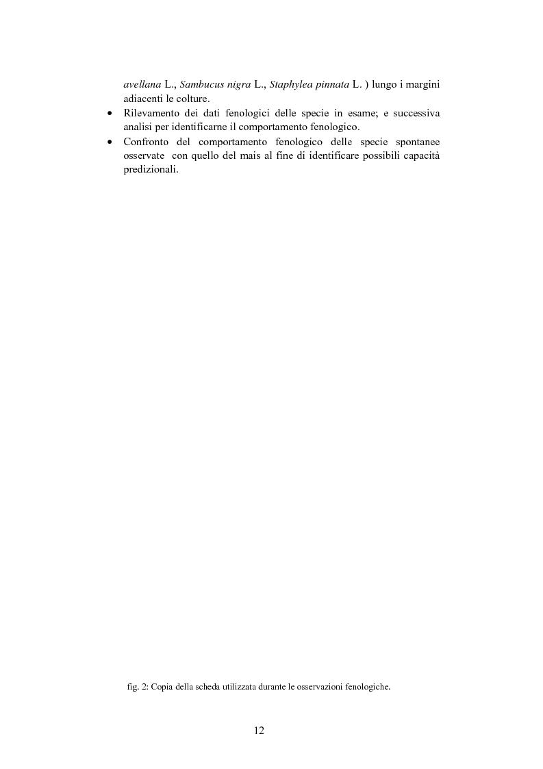 Anteprima della tesi: Fenologia e predittività di specie spontanee nel bosco Olmè di Cessalto (TV) in rapporto a Zea mays L., Pagina 5