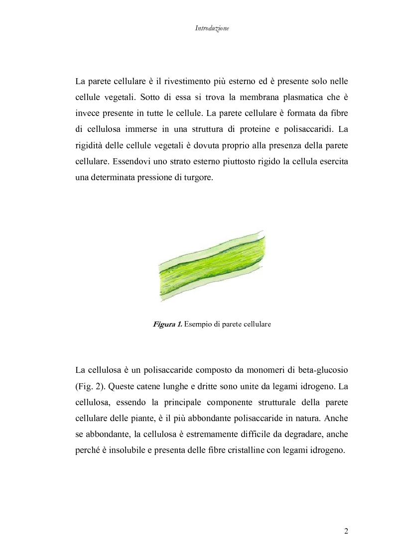 Anteprima della tesi: Utilizzo di nuove miscele enzimatiche di origine fungina per migliorare la qualità nutrizionale della fibra di grano duro., Pagina 2
