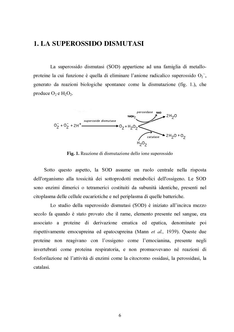 Anteprima della tesi: Studio in chemostato della produzione di superossidodismutasi con kluyveromices Marxianus, Pagina 1