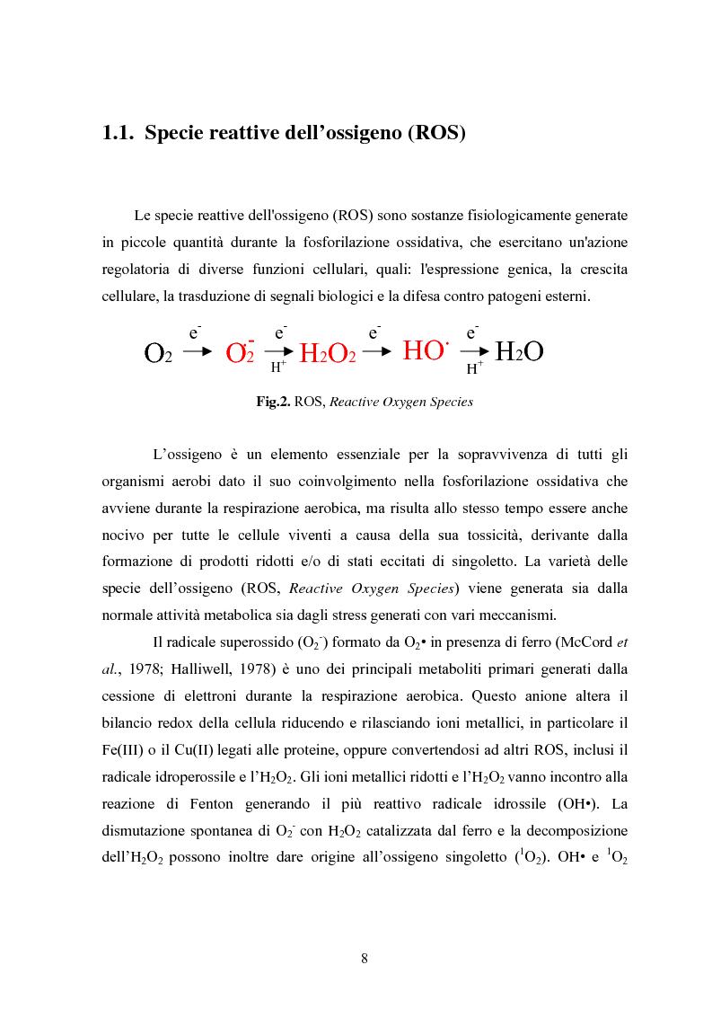 Anteprima della tesi: Studio in chemostato della produzione di superossidodismutasi con kluyveromices Marxianus, Pagina 3