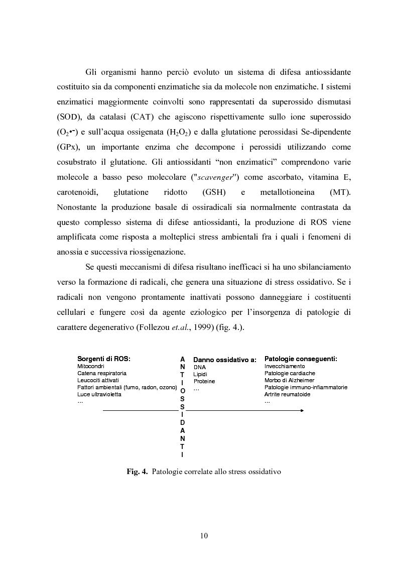 Anteprima della tesi: Studio in chemostato della produzione di superossidodismutasi con kluyveromices Marxianus, Pagina 5