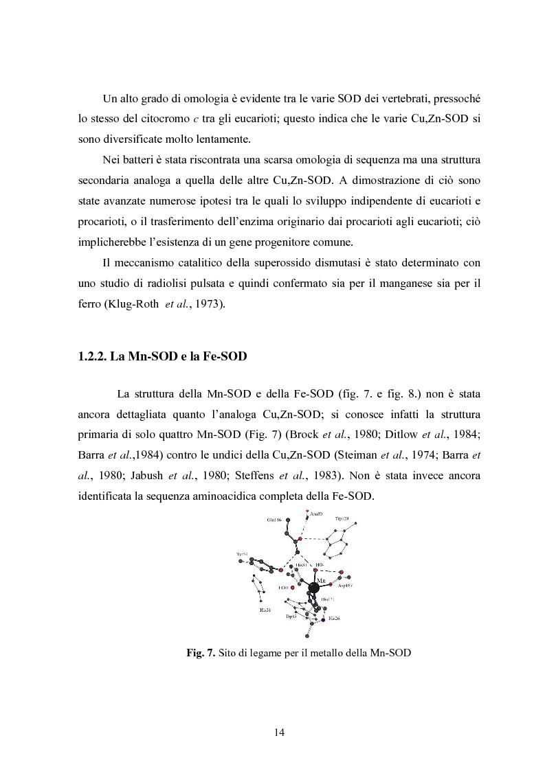 Anteprima della tesi: Studio in chemostato della produzione di superossidodismutasi con kluyveromices Marxianus, Pagina 9