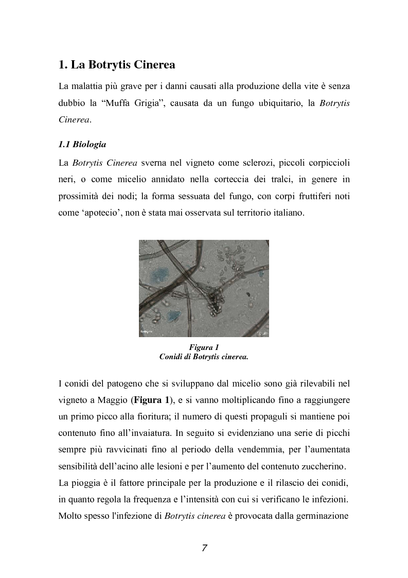 Anteprima della tesi: Valutazione della qualità di uve Sangiovese mediante tecnica FT-IR, Pagina 2