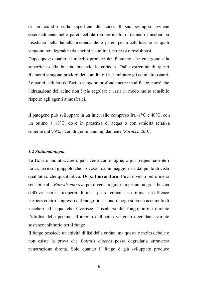 Anteprima della tesi: Valutazione della qualità di uve Sangiovese mediante tecnica FT-IR, Pagina 3