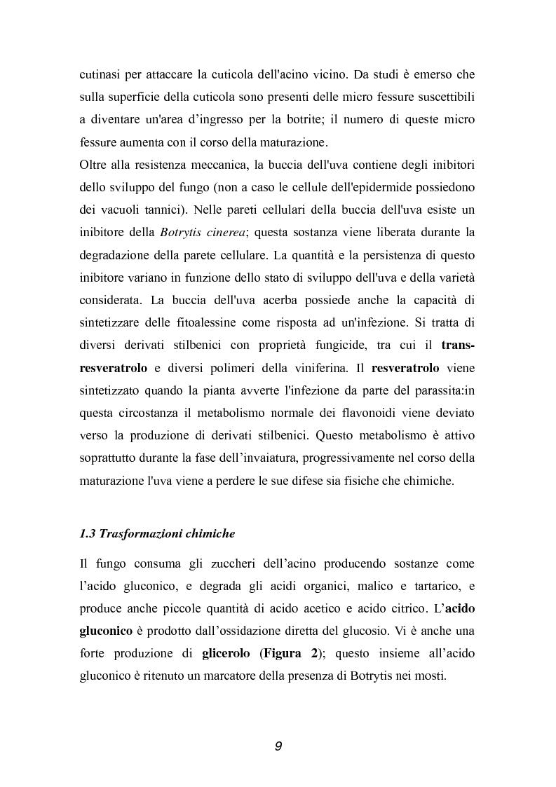Anteprima della tesi: Valutazione della qualità di uve Sangiovese mediante tecnica FT-IR, Pagina 4