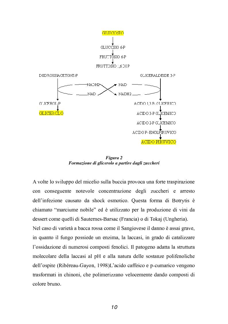 Anteprima della tesi: Valutazione della qualità di uve Sangiovese mediante tecnica FT-IR, Pagina 5