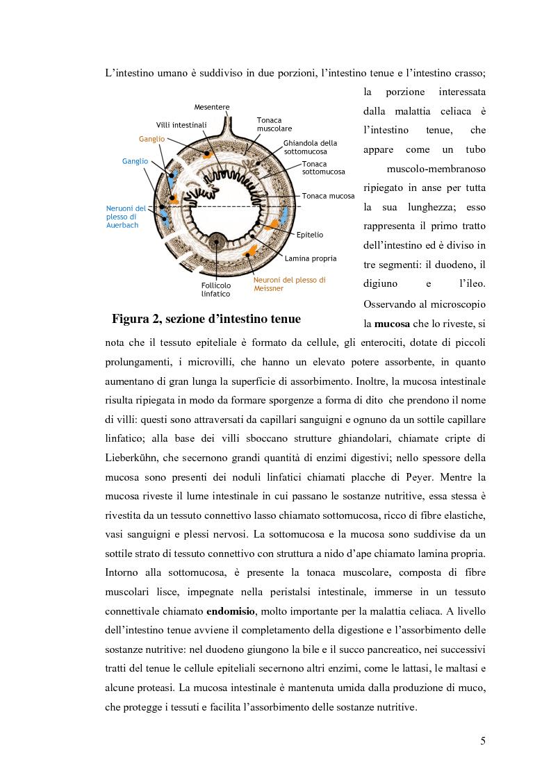 Anteprima della tesi: Metodi usati in laboratorio per la diagnosi della malattia celiaca, Pagina 2