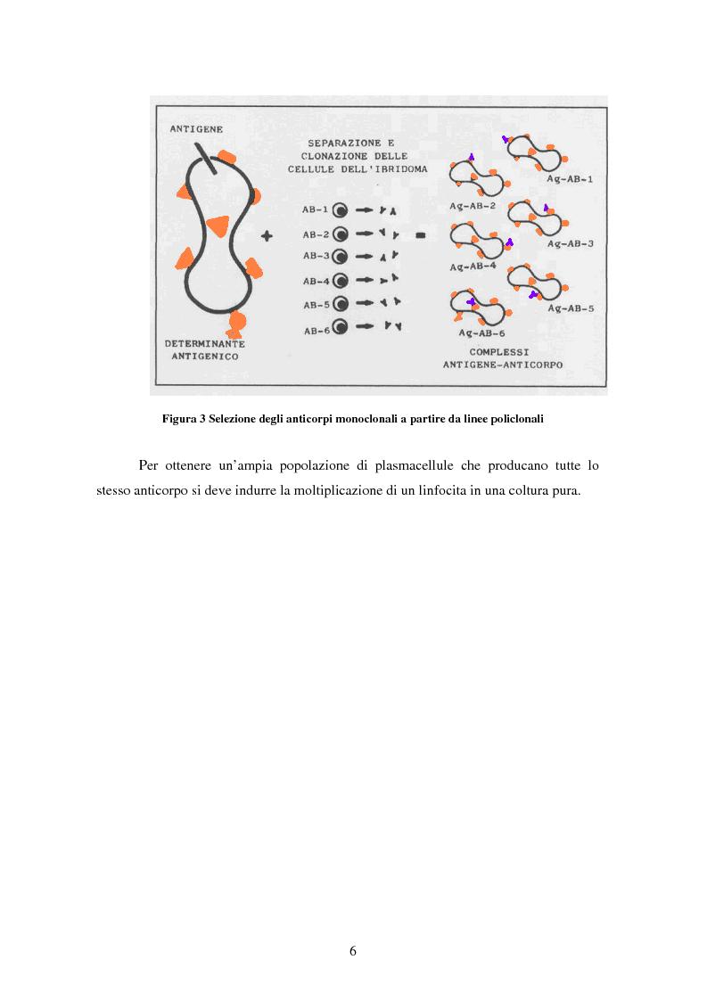 Anteprima della tesi: Produzione di anticorpi monoclonali con scopi diagnostici in ambito veterinario ed alimentare, Pagina 6