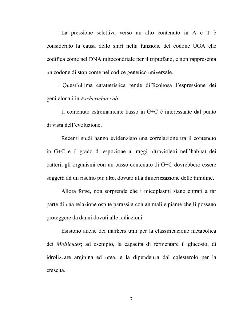 Anteprima della tesi: Uso delle mcs4 e lppa PCRs per la differenziazione molecolare di Mycoplasma capricolum subsp. capricolum e Mycoplasma mycoides subsp. mycoides LC, Pagina 5