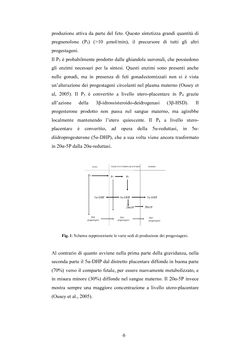Anteprima della tesi: Andamento dei livelli plasmatici di ACTH e cortisolo nel puledro neonato setticemico, Pagina 4