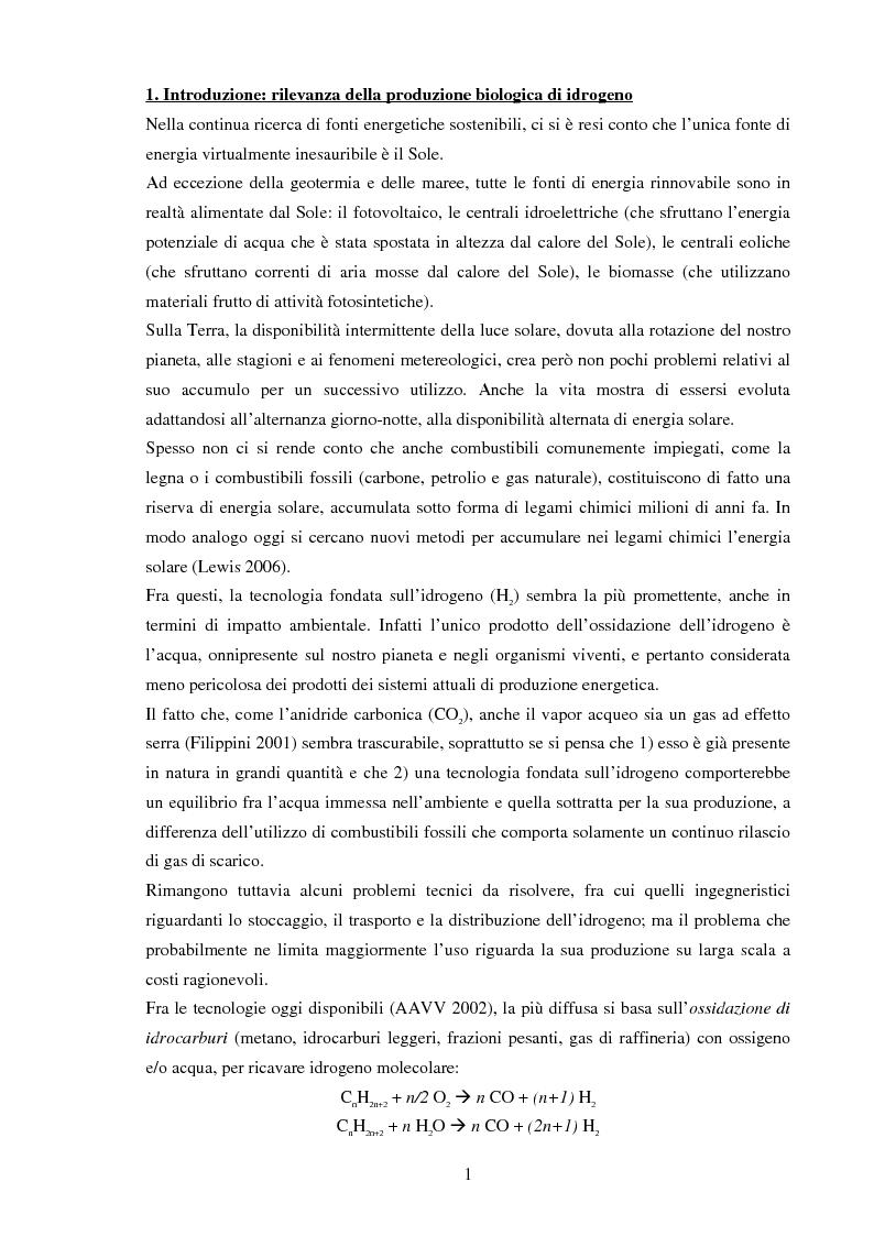 Anteprima della tesi: Strategie e metodi per la produzione biologica di idrogeno, Pagina 1