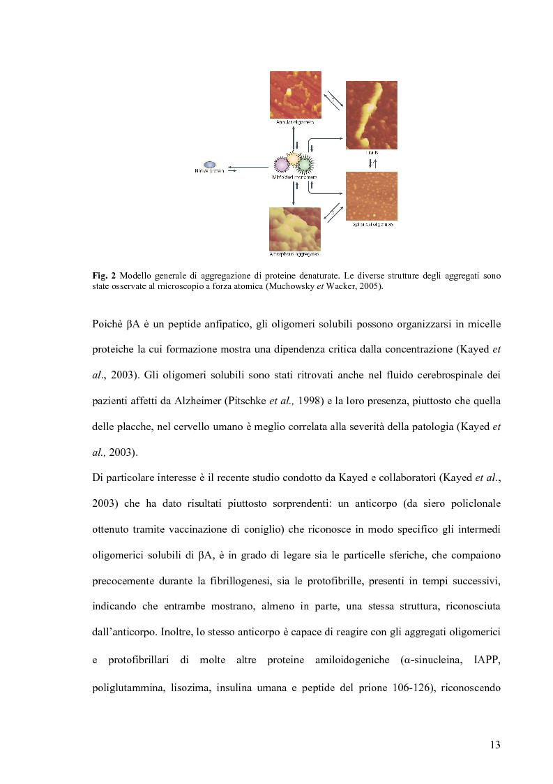 Anteprima della tesi: Studi di citossicità del peptide beta-amiloide (1-40), implicato nel morbo di Alzheimer, su protisti utilizzati come organismi modello, Pagina 7