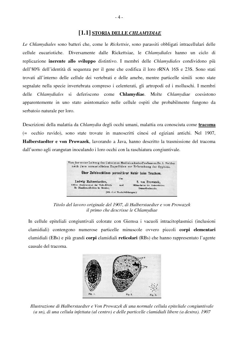 Chlamydophila pneumoniae e polmoniti acquisite in comunit�: la nostra esperienza - Tesi di Laurea