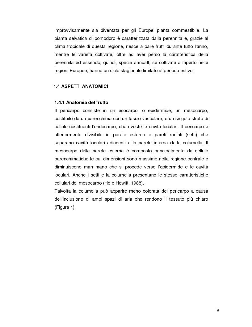 Anteprima della tesi: Pattern isoenzimatico e attività di perossidasi in frutti di pomodoro dela linea HP-1 maturati in presenza o assenza della radiazione UV-B, Pagina 8