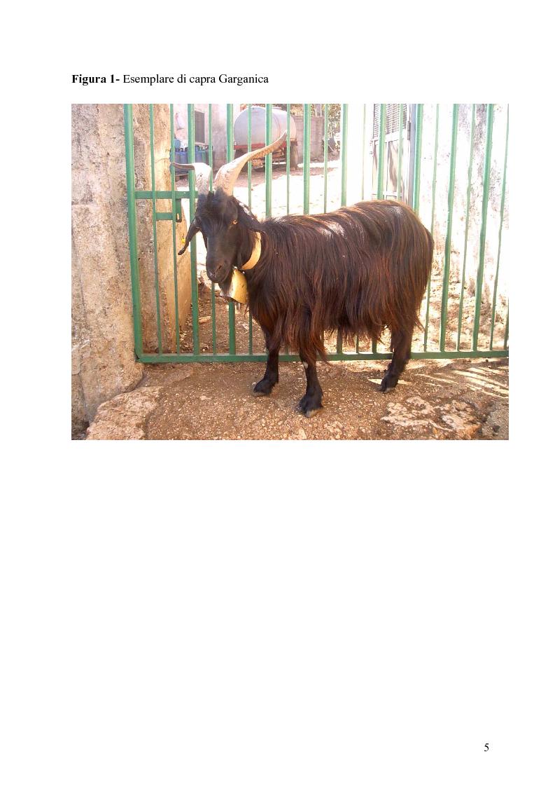 Anteprima della tesi: Caratterizzazione enzimatica ed elettroforetica del latte di capra Garganica, Pagina 2