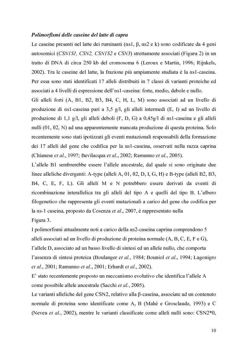 Anteprima della tesi: Caratterizzazione enzimatica ed elettroforetica del latte di capra Garganica, Pagina 7