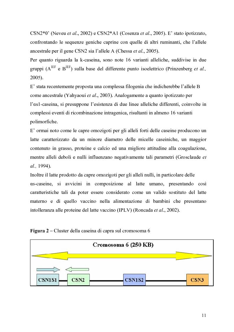 Anteprima della tesi: Caratterizzazione enzimatica ed elettroforetica del latte di capra Garganica, Pagina 8