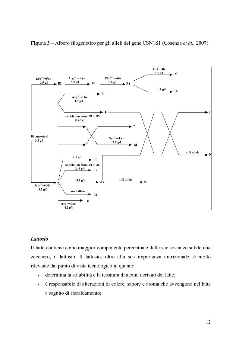 Anteprima della tesi: Caratterizzazione enzimatica ed elettroforetica del latte di capra Garganica, Pagina 9