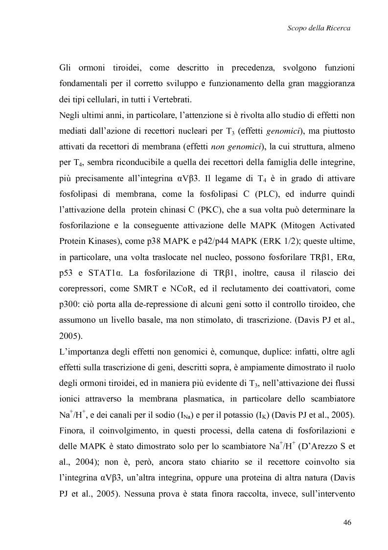 Anteprima della tesi: Effetti non genomici degli ormoni tiroidei in epatociti durante lo sviluppo embrionale, Pagina 1